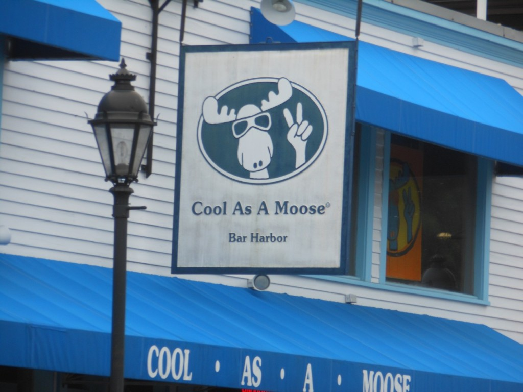 Cool as a Moose in Bar Harbor.